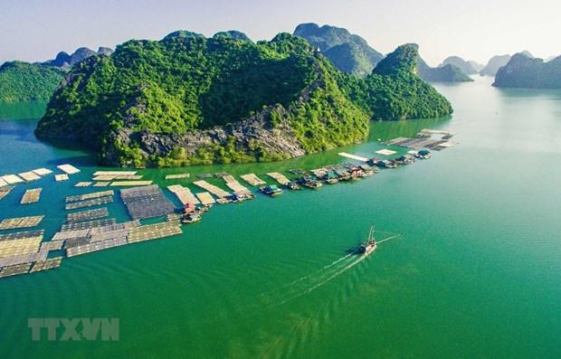Nhieu hoat dong dac sac tai Le hoi Hoa Phuong Do Hai Phong 2021 hinh anh 1
