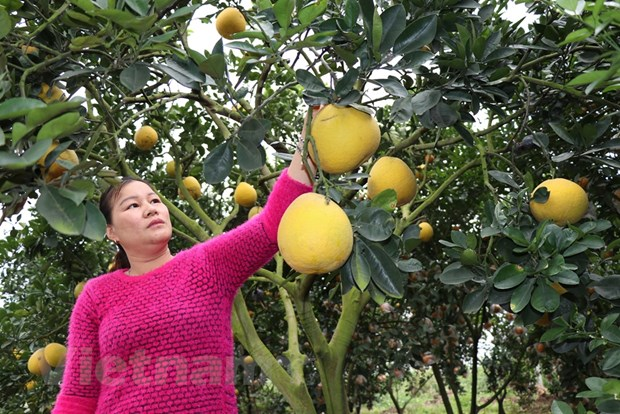 Nhung 'nut that' khien nong nghiep Viet chua the cat canh hinh anh 4