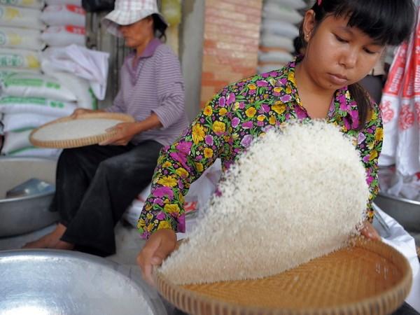 Campuchia xuat khau hon 268.000 tan gao trong nua dau nam hinh anh 1