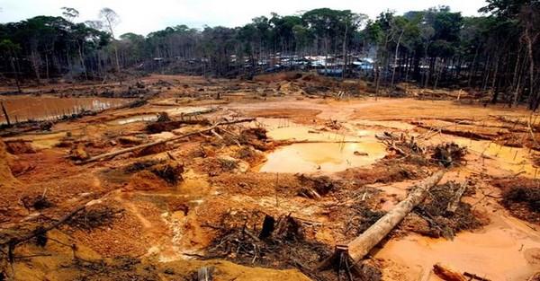 8.000km2 dien tich rung Amazon bi tan pha trong nam 2016 hinh anh 1