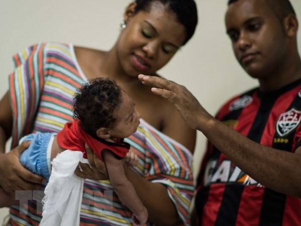 Bo Y te Brazil tuyen bo do bo tinh trang khan cap do virus Zika hinh anh 1