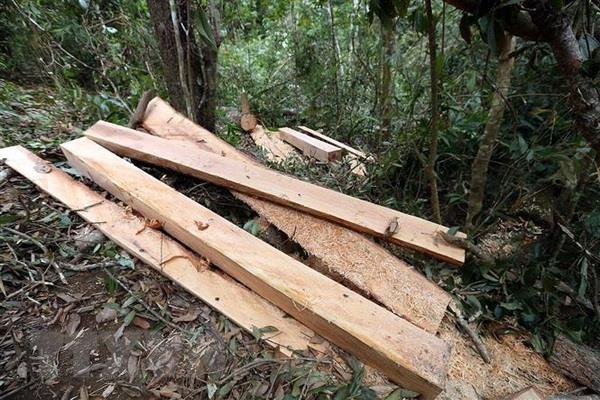 Quang Binh: Phat hien 4,6m3 go trai phep trong tru so UBND xa hinh anh 1
