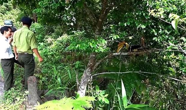 Thua Thien-Hue: Tha chim Hong Hoang co ten trong sach do ve rung hinh anh 2