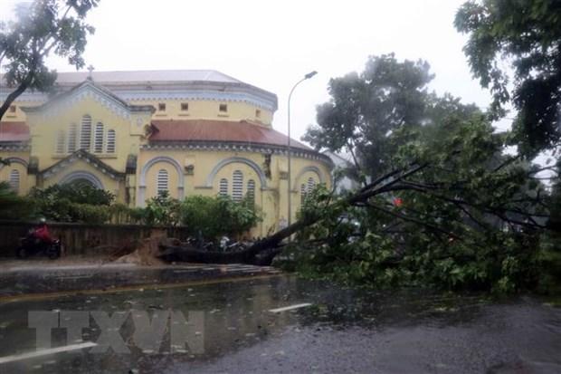 Cây xanh bị gió quật ngã trên đường Hà Nội, thành phố Huế. (Ảnh: Đỗ Trưởng/TTXVN)