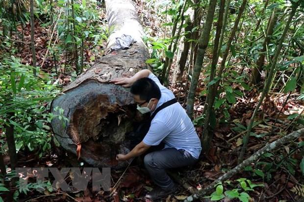 Quang Ngai: Rung phong ho o Duc Pho lien tuc bi chat pha hinh anh 2