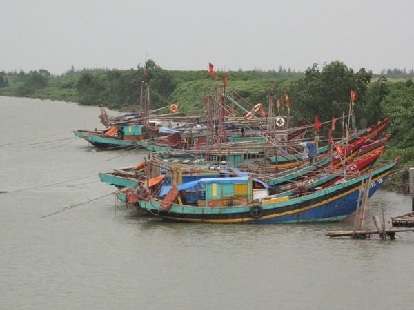 Binh Dinh: Con ba tau ca dang di chuyen tranh bao hinh anh 1