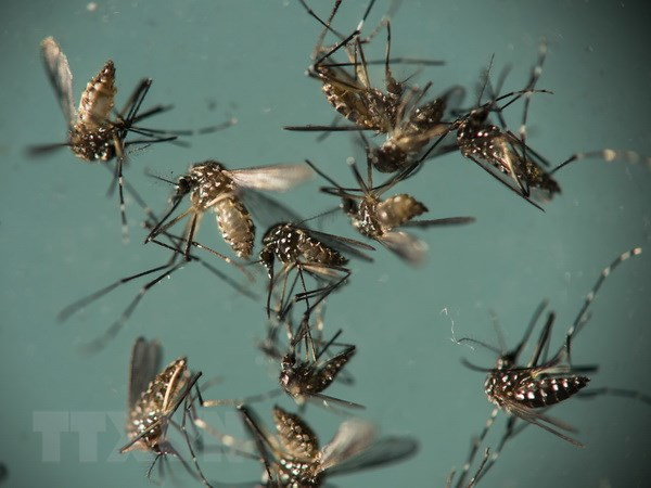 Virus Zika anh huong den 5% phu nu mang thai o vung hai ngoai My hinh anh 1