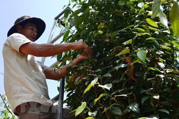 Xuat khau nong, lam va thuy san 11 thang qua tang hon 9% hinh anh 2