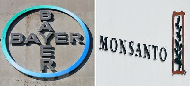 "Duc: Doanh nghiep Bayer gap rac roi voi ""canh bac"" Monsanto hinh anh 1"