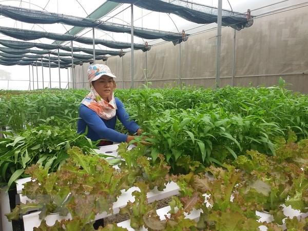 Quang Ninh day manh ho tro ung dung cong nghe cao trong hop tac xa hinh anh 1