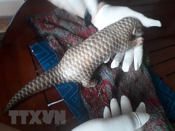 Binh Dinh: Nguoi dan trao dong vat hoang da quy hiem cho Hat Kiem lam hinh anh 1