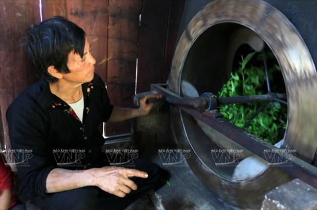 "[Photo] ""Vang xanh"" tren cao nguyen Tua Chua- Dien Bien hinh anh 8"