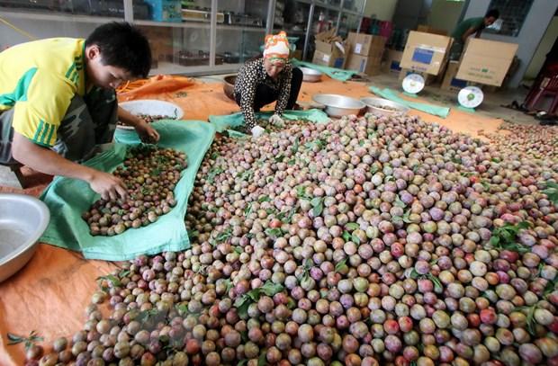 [Photo] Doi song nguoi Moc Chau doi thay nho vay von uu dai hinh anh 3