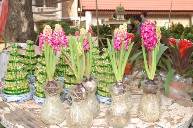 Tet Viet co truyen ron ra Vientiane, am long nhung nguoi con xa xu hinh anh 2