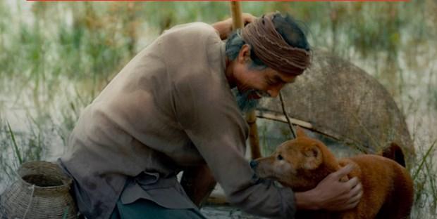 Mac du luan, 'Cau Vang' ngoai van duoc chon cho phim thuan Viet? hinh anh 1