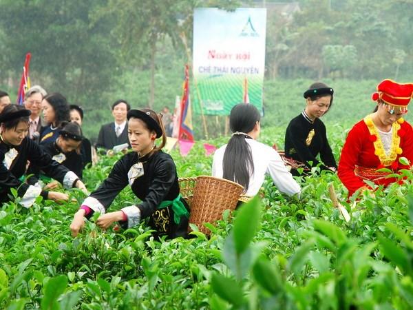 Xuc tien dau tu-du lich tai Festival Tra Thai Nguyen hinh anh 1