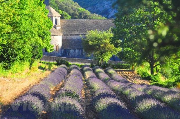 Nhung neo duong EURO: Tren con duong cua xu Provence hinh anh 1