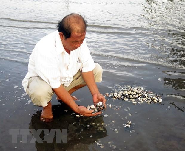 TP Ho Chi Minh: Ngheu chet hang loat tai huyen Can Gio hinh anh 2