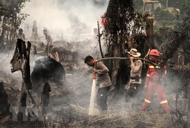 Indonesia tuyen bo tinh trang khan cap do cac dam chay rung hinh anh 1