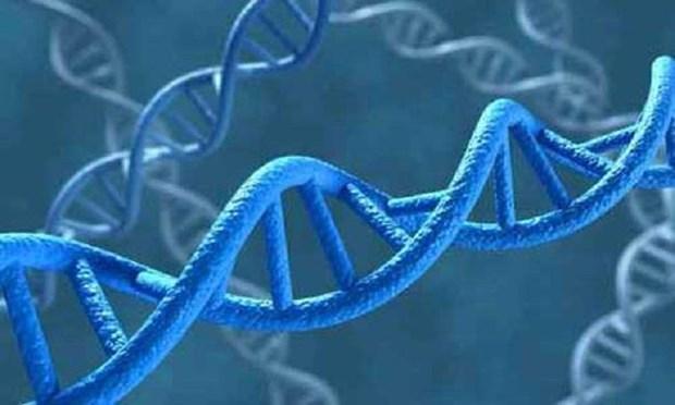 Somalia lan dau tien su dung ADN de ket an cac 'yeu rau xanh' hinh anh 1