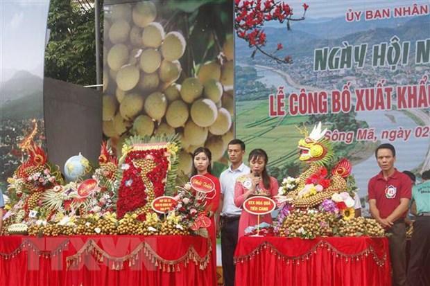 Xuat khau 60 tan nhan Son La sang thi truong Trung Quoc va cac nuoc hinh anh 2
