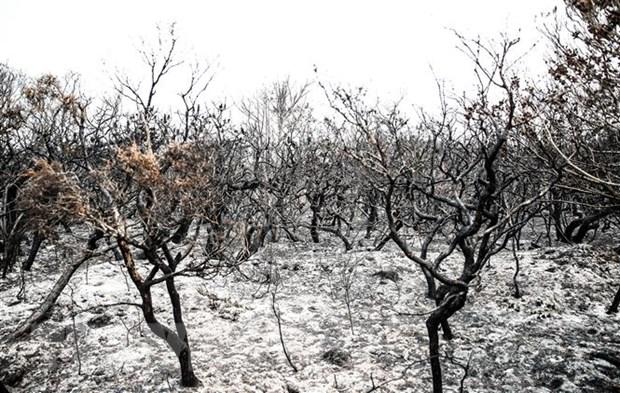 Kết quả hình ảnh cho cháy rừng ở úc
