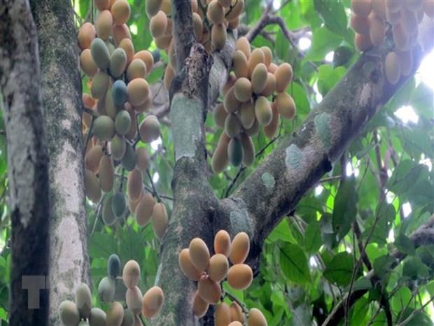 Thanh Hoa: Nhan giong thanh cong 7.600 cay rau sang quy hinh anh 2