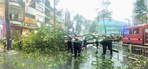 Thanh pho Ho Chi Minh: Cay bat goc do mua lon, de trung nguoi di duong hinh anh 1