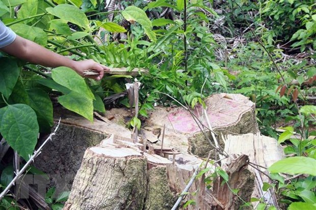 Khởi tố, bắt tạm giam thêm một đối tượng phá rừng giáp ranh ở Phú Yên