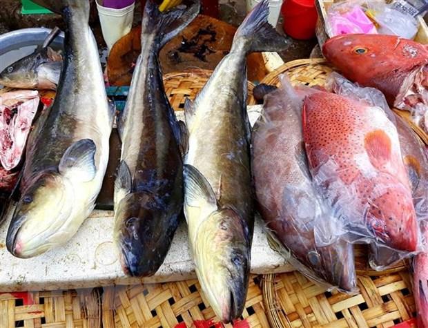 Du lich Ninh Thuan: Dau an tu mot vung dat nhieu nang gio hinh anh 2