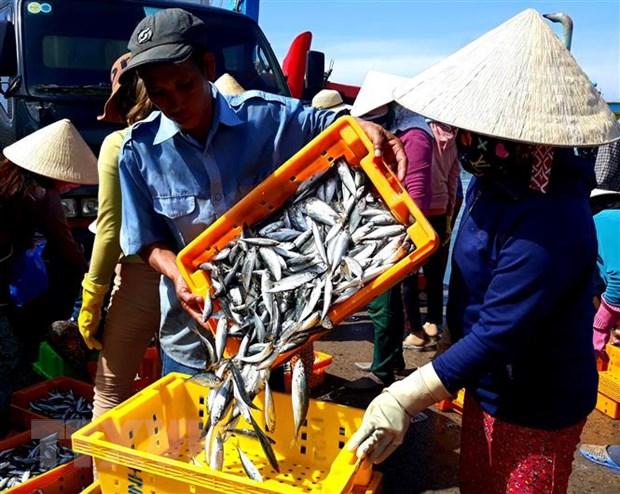 Ninh Thuan voi giai phap giup ngu dan khai thac thuy san hop phap hinh anh 2