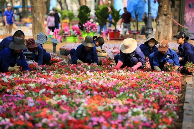 Le hoi hoa anh dao san sang mo cua don du khach Thu do hinh anh 12