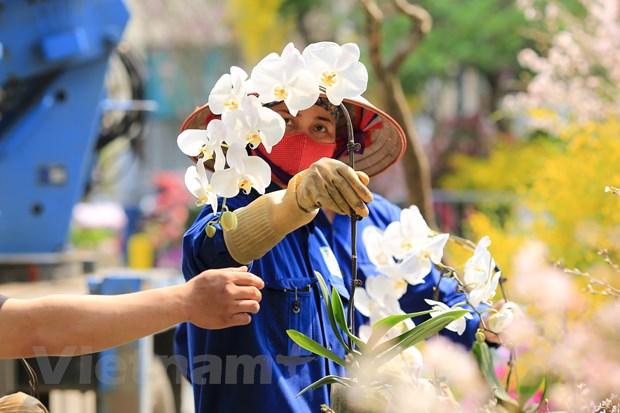 Le hoi hoa anh dao san sang mo cua don du khach Thu do hinh anh 13