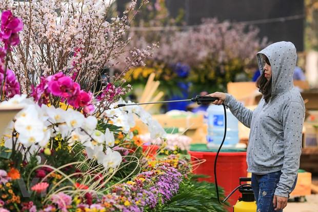 Le hoi hoa anh dao san sang mo cua don du khach Thu do hinh anh 14