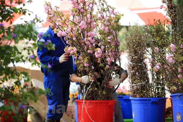 Le hoi hoa anh dao san sang mo cua don du khach Thu do hinh anh 4