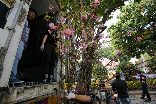 Le hoi hoa anh dao san sang mo cua don du khach Thu do hinh anh 9