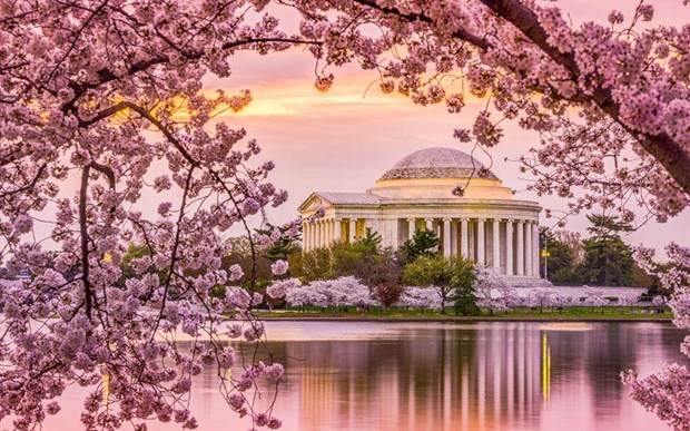 [Video] Time-lapse hoa anh dao no ro o thu do Washington cua My hinh anh 1