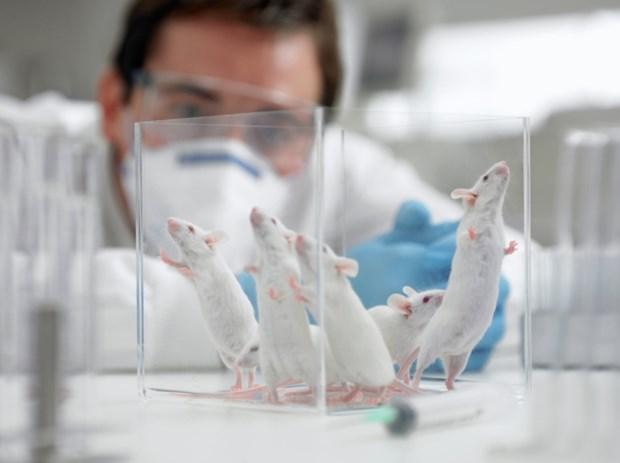Vien Pasteur cua Phap thu nghiem vacxin chong COVID-19 tren chuot hinh anh 1