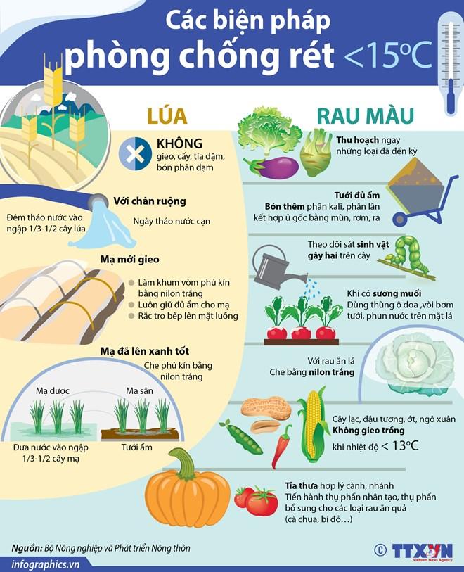 [Infographics] Các biện pháp phòng chống rét cho lúa và rau màu - ảnh 1