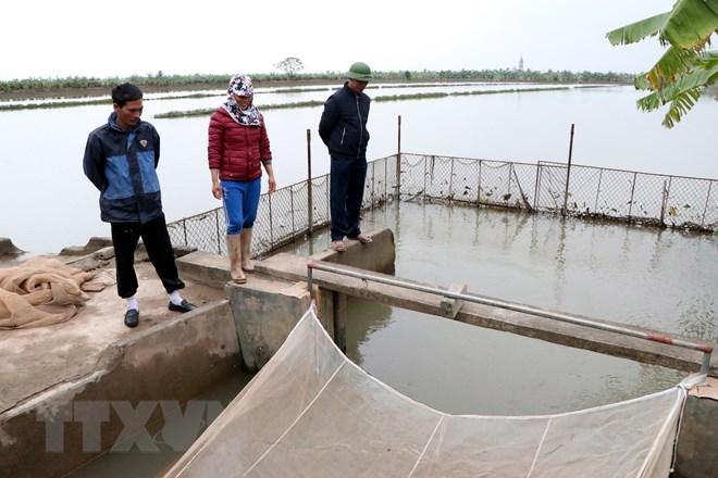 Người dân khoanh vùng, làm cống để dẫn nước thủy triều vào ruộng, để thuận lợi cho việc khai thác rươi. (Ảnh: Mạnh Tú/TTXVN)