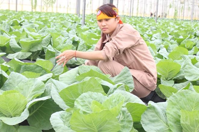 'Hướng đi nào cho người nông dân' giành giải cuộc thi biến đổi khí hậu - ảnh 2