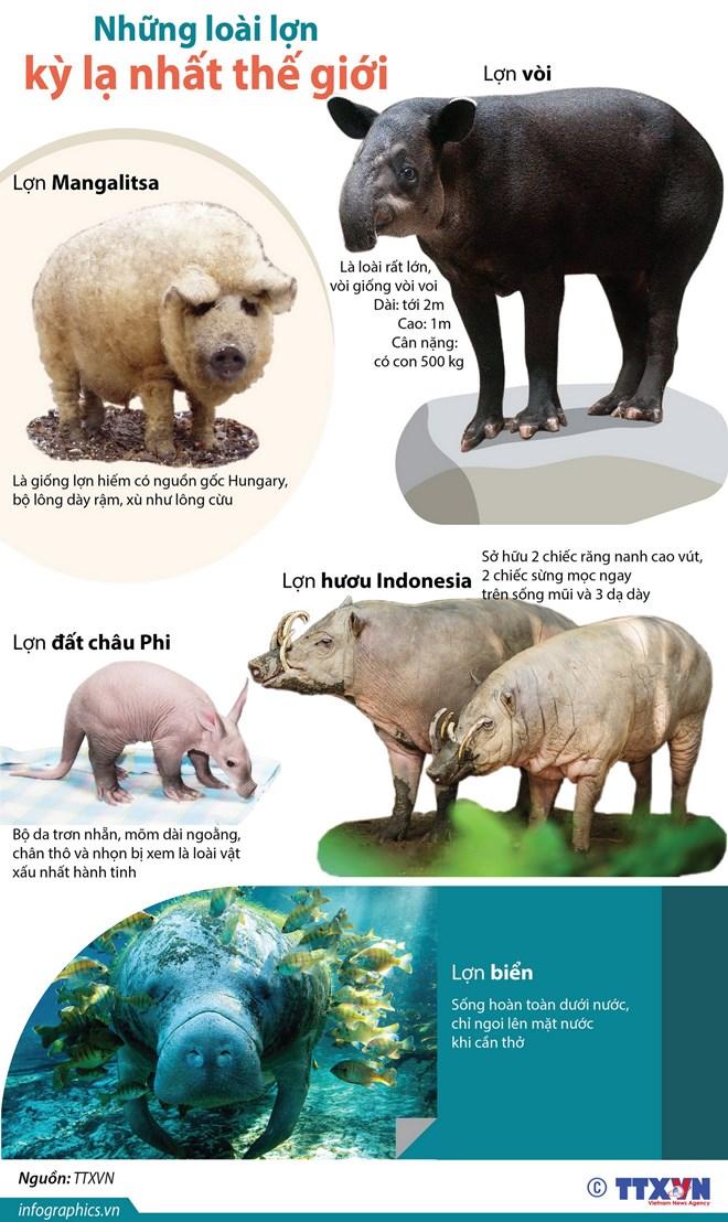 [Infographics] Những loài lợn kỳ lạ nhất trên thế giới