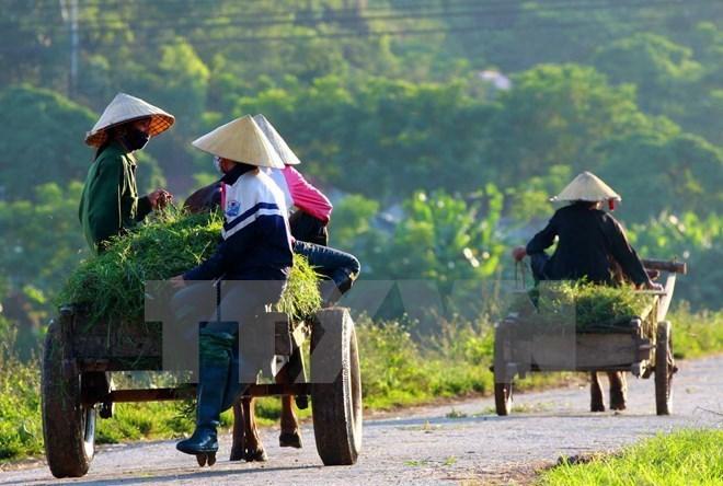 Su kien trong nuoc 2-8/4: Bat nguyen Trung tuong Phan Van Vinh hinh anh 5