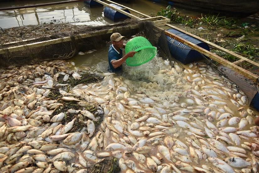 Đồng Nai: Mưa lớn, gần 1.000 tấn cá trên sông La Ngà chết hàng loạt | Xã hội | Vietnam+ (VietnamPlus)