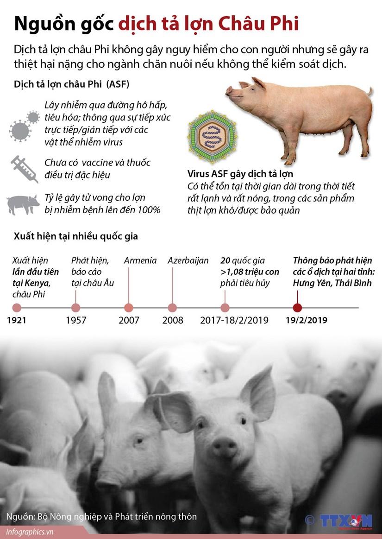 [Infographics] Tim hieu nguon goc dich ta lon chau Phi hinh anh 1