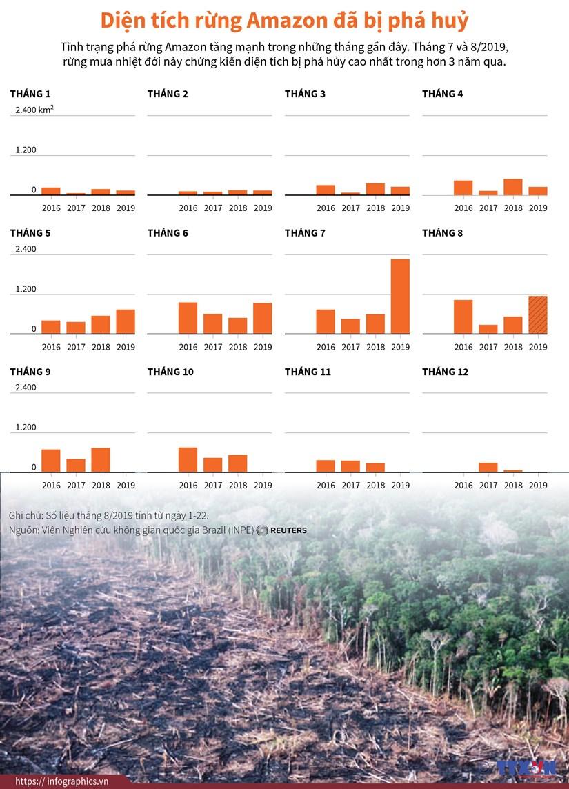 [Infographics] Dien tich rung Amazon bi pha huy trong hon 3 nam qua hinh anh 1