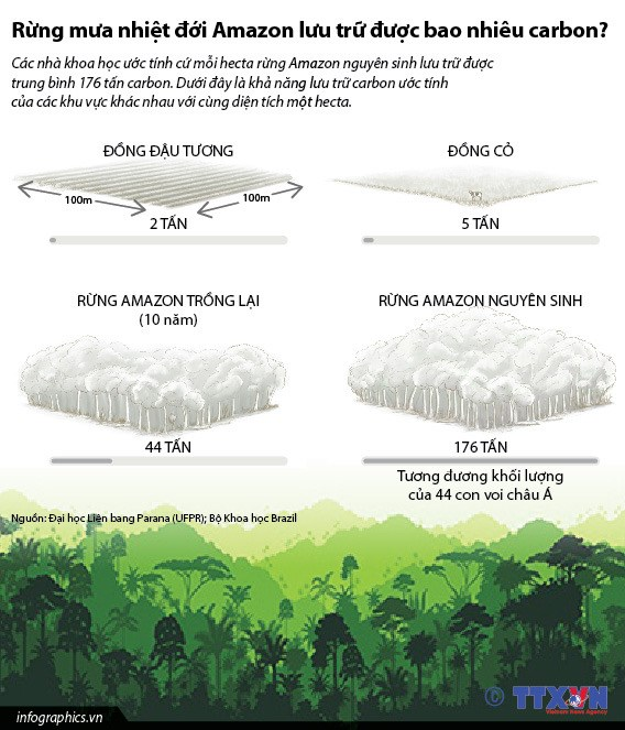 [Infographics] Rung mua nhiet doi Amazon luu tru bao nhieu carbon? hinh anh 1