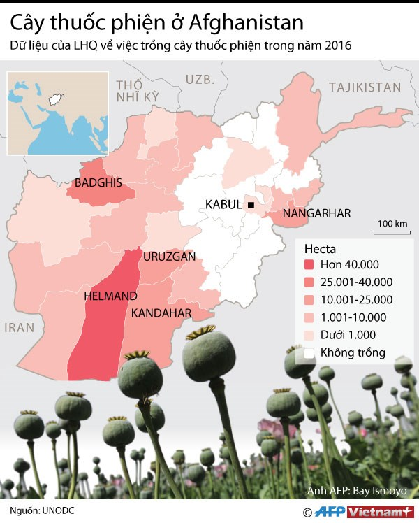 [Infographics] Afghanistan dang thua trong cuoc chien ma tuy hinh anh 1