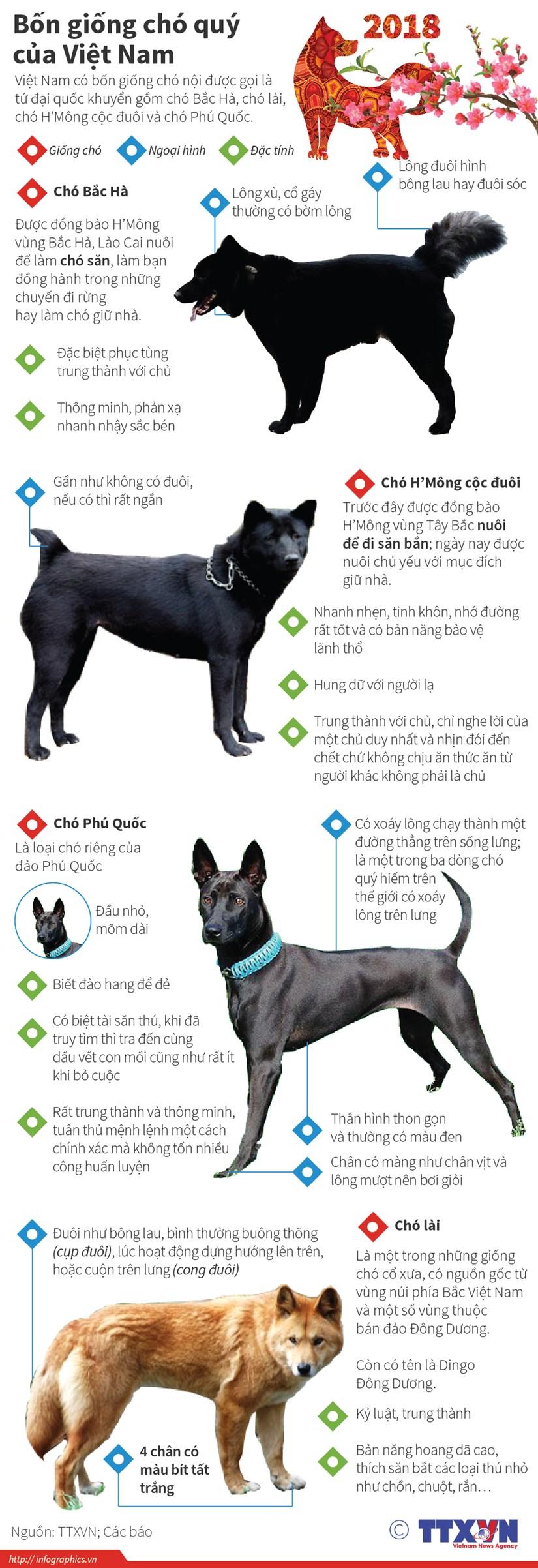 """[Infographics] Bon giong cho """"tu dai quoc khuyen"""" cua Viet Nam hinh anh 1"""