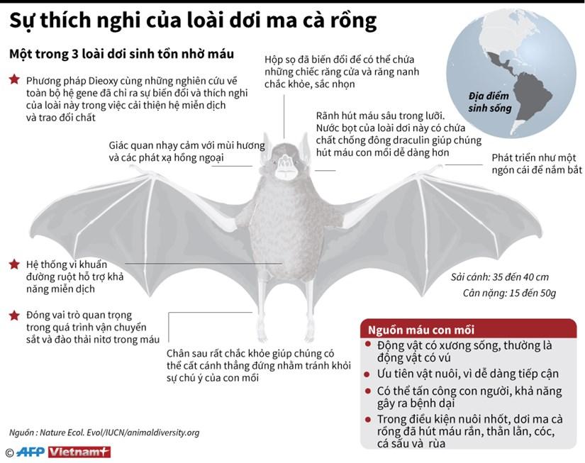 [Infographics] Su thich nghi cua loai doi ma ca rong hut mau hinh anh 1